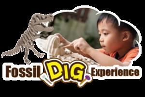 Fossil Dig Exprience | STEM RESORT okinawa