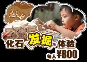 化石发掘体验 STEM-RESORT 冲绳 丰崎